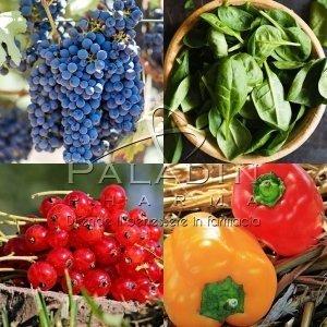 PALADINPHARMA - Mix Frutta e Verdura